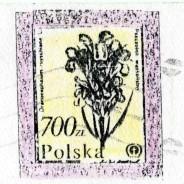 Fantazyjne fałszerstwo na szkodę poczty, kartek pocztowych z obiegu, nadanych w Złotoryji.